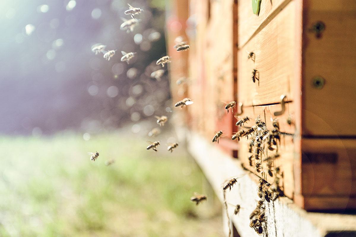 Bienen - Bauernhofurlaub in Radstadt
