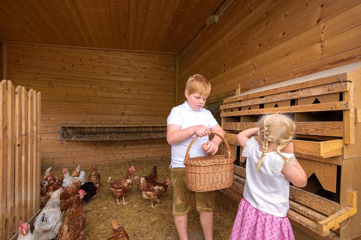 Hühner - Bauernhofurlaub in Radstadt