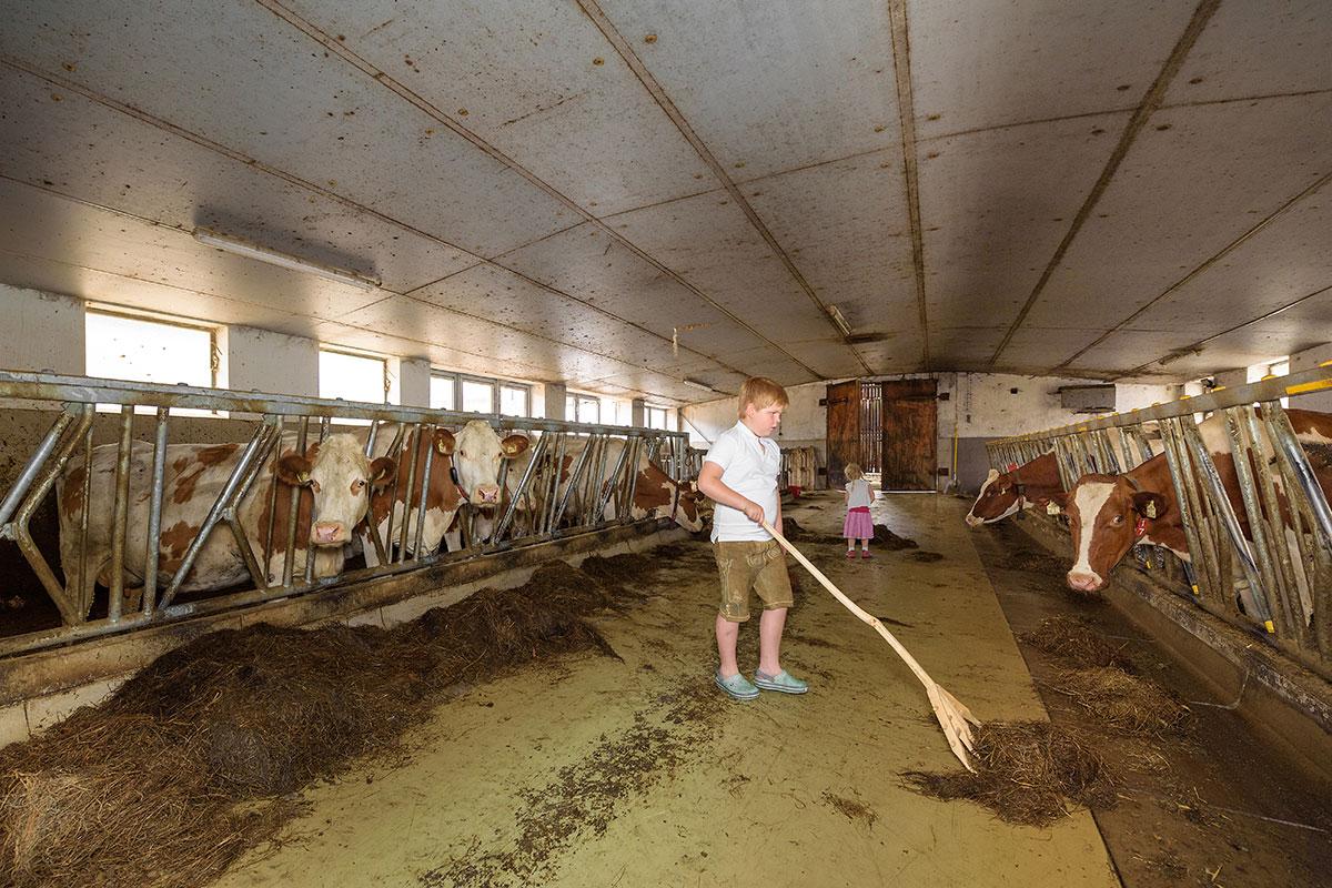 Kühe - Bauernhofurlaub in Radstadt