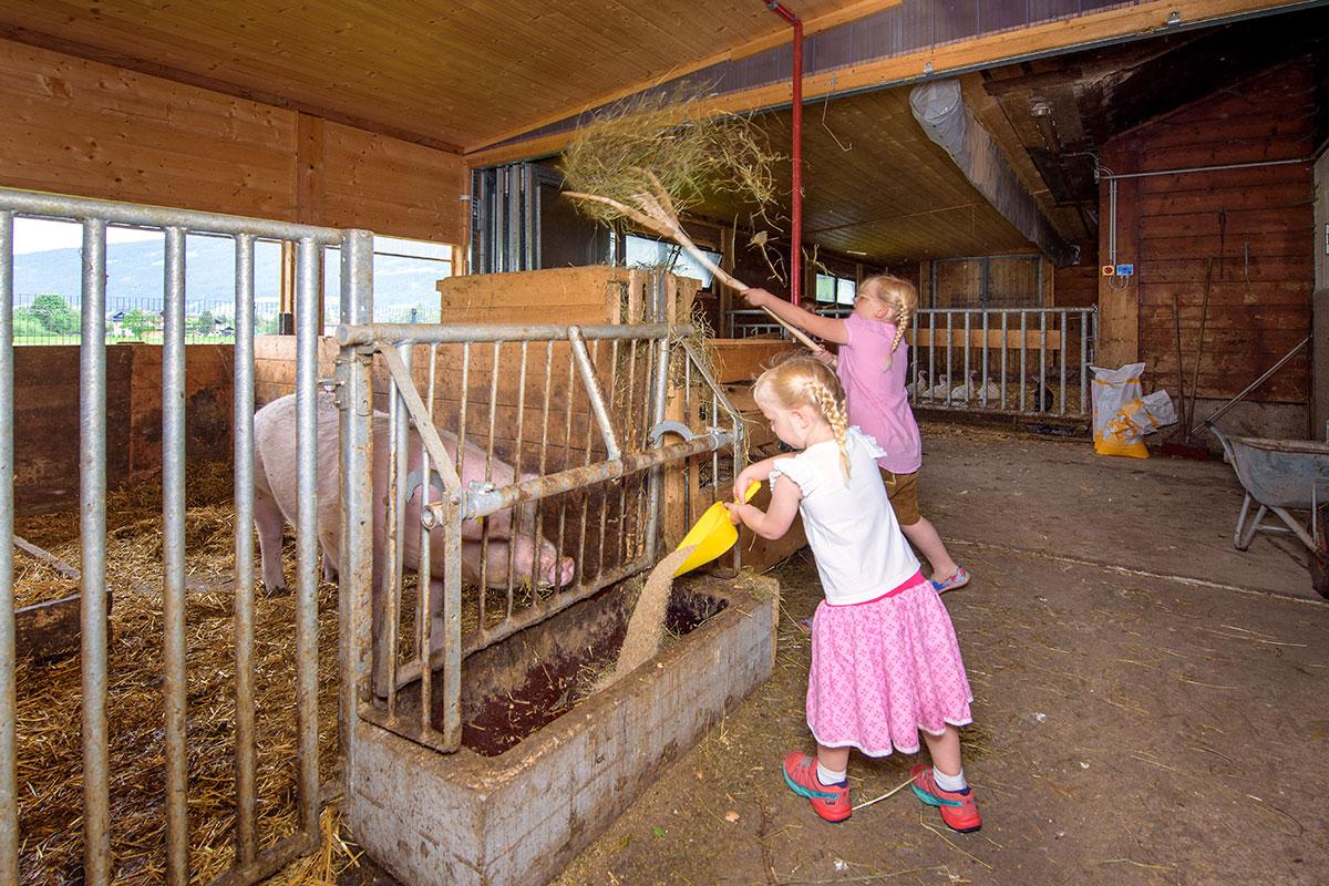 Schwein - Bauernhofurlaub in Radstadt